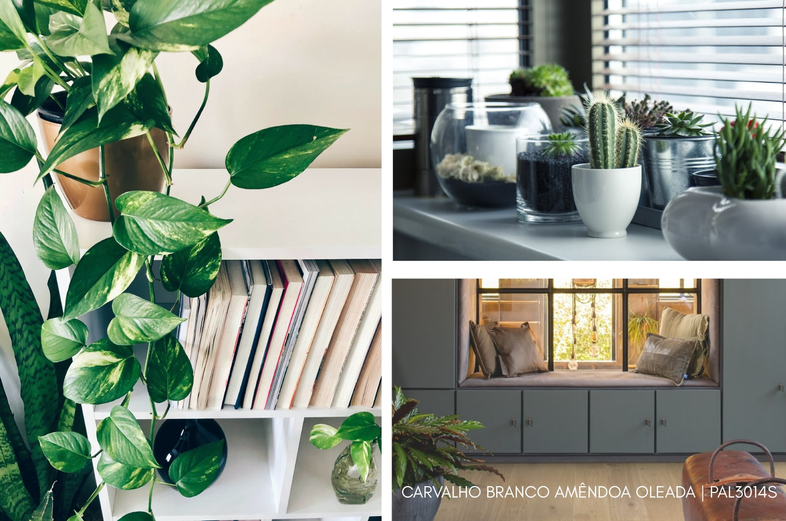 Carvalho-Branco-Amendoa-oleada-PAL3014S.jpg